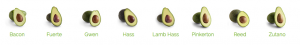 picture of types of different avocados